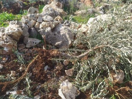 Settlers uproot 13 olive trees in West Bank village
